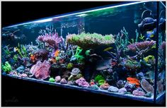 BEST tanks of Reef2Reef (nominate)
