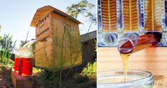 This amazing beehive technology makes the process of honey harvesting so much easier