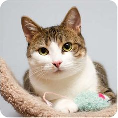 Stunning Martini is a total joy and is being adopted via Toronto Cat Rescue.  She has been spayed, vaccinated and was born January 6, 2011.