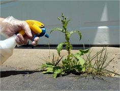 DIY Weed Killer plus natural additives Organic Gardening, Gardening Tips, Weed Killer Homemade, Weeds In Lawn, Vinegar Uses, Vinegar Salt, Lawn And Garden, Garden Web, Garden Plants
