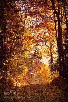 Autumn by ginaups  autumn forest light path woods Kurtuvenu regioninis parkas leaves lithuania sunset trees Autumn gina