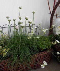 die 14 besten bilder von gr ser f r gauting outdoor plants landscaping und ornamental grasses. Black Bedroom Furniture Sets. Home Design Ideas