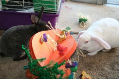 Crazy HUGE Carrot Rabbit Playground Equipment : Pet Rabbit Toys, Homemade Toys for Rabbits  My BeeBee and Alice made their toy webpage!! I never though I would have supermodel rabbits!!!