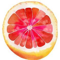 Grapefruit watercolor