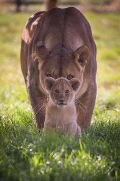 Welcome to nature on cute animal pictures 150 of the cutest animals! Nature Animals, Animals And Pets, Nature Nature, Wild Animals, Wildlife Nature, Beautiful Cats, Animals Beautiful, Big Cats, Cute Cats