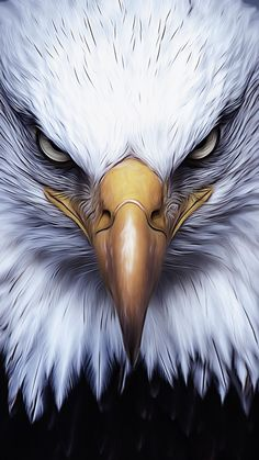 Eagle Wallpaper, Abstract Iphone Wallpaper, Bird Wallpaper, Animal Wallpaper, Eagle Images, Eagle Pictures, Eagle Artwork, Bird Artwork, Eagle Hunting