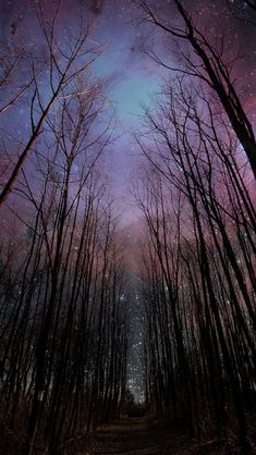 Wither Trees Towards Shiny Starry Sky #iPhone #5s #wallpaper