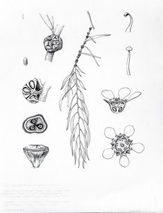 nature drawing hd full images gallery best natural drawing photo nature drawing hd full images gallery best natural drawing photo drawings art gallery