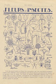 Discover recipes, home ideas, style inspiration and other ideas to try. Motifs Art Nouveau, Design Art Nouveau, Motif Art Deco, Art Nouveau Pattern, Botanical Art, Botanical Illustration, Illustration Art, Sgraffito, Cartoon Drawings