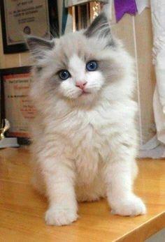 Sweet pretty little baby!!❤❤ #persiancateyes