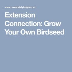 Extension Connection: Grow Your Own Birdseed