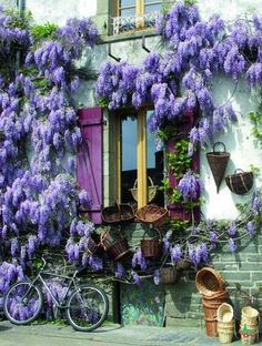 wisteria...out front...on my porch