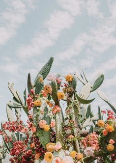 iphone wallpaper cactus April Faves Last Months Faves! B&w Wallpaper, Aesthetic Iphone Wallpaper, Aesthetic Wallpapers, Watercolor Clipart, Flower Aesthetic, Aesthetic Plants, Spring Aesthetic, Aesthetic Drawing, Red Aesthetic