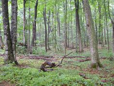 Lincoln County Wisc; Quality Forest land & Wildlife!