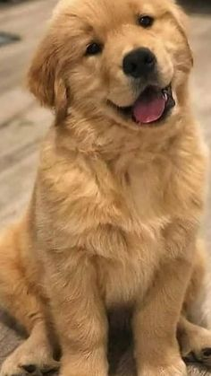 Super Cute Puppies, Cute Baby Dogs, Super Cute Animals, Cute Dogs And Puppies, Cute Baby Animals, Pet Dogs, Funny Animals, Doggies, Beautiful Dogs