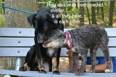 In an overcrowded shelter, the owner of these two sweet dogs tells the shelter to keep them.