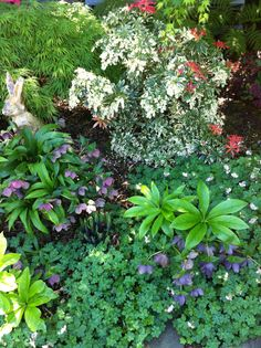 Spring shade plants