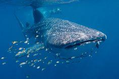 Los cinco mejores destinos de buceo del mundo