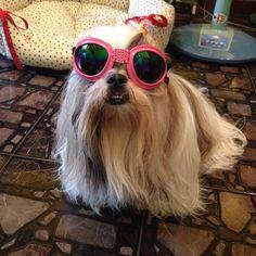 #mimi_shihtzu #pet #paws #puppy #shihtzu #showdog #shihtzus #shihtzuclub #shihtzulover #shihtzupuppy #showcasing_pets #cute #animal #animallovers #ilovedog #InstaShihTzu #ilovedog #instadog