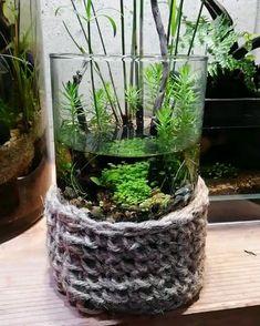 Another Amazing Mini Bottle Aquarium - Mini Garden Planted Aquarium, Aquarium Garden, Mini Aquarium, Container Water Gardens, Container Gardening, Indoor Water Garden, Indoor Plants, Terrarium Plants, Fish Tank Terrarium