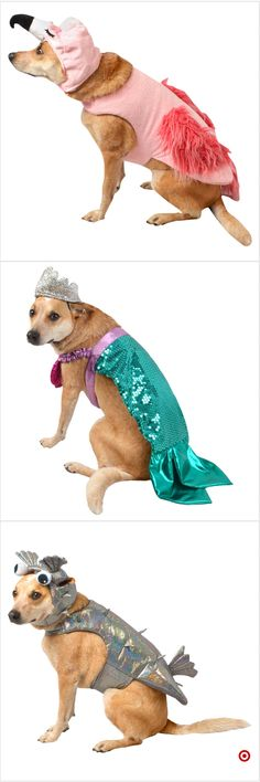Shop Target for pet costume sets you will love at great low prices. Free shipping on orders of $35+ or free same-day pick-up in store. Dog Halloween Costumes, Pet Costumes, Animal Costumes, Cute Funny Animals, Funny Animal Memes, Funny Dogs, Cute Cats, Animal Funnies, Dog Pictures
