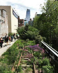 Encore une incroyable journée sur la Highline  #newyork #manhattan #nyc #highline #summer #tourism #insolite #visite #newyorkoffroad #thehighline #parc #hudsonyards #visit #tour #francaisauxusa #usa #photooftheday | Photo de @newyorkoffroad