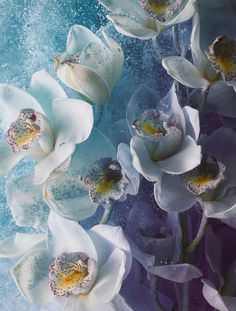 <p>Owen Silverwood is an established photographer and director working within the field of still life. His aesthetic is considered and striking, combining the technical and graphic. I love his Bloom s