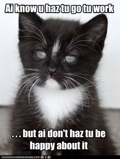 Poor kitty. Haha this is like dexter when I go to work