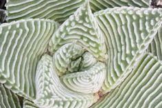 Suculentas: Dicas e Cuidados - Blog Arco do Verde