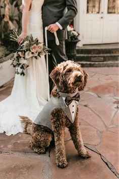 Free Wedding, Formal Wedding, Wedding Tips, Wedding Photos, Dogs At Wedding, Wedding Songs, Grey Tuxedo Wedding, Wedding Details, Wedding Favors