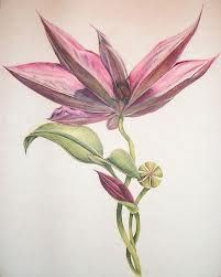 Image result for clematis art