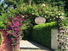 Giardino di rose antiche con casa colonica 💗