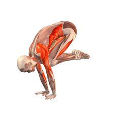 Crane pose - Bakasana - Yoga Poses | YOGA.com