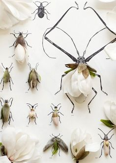 Kari Herer's Magnolia Bug No. 6672 via Plant Propaganda