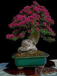Some good pics of bonsai