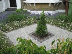 Tim Mackley Garden Design, London, 43 Whateley Road, opening hours, Tim Mackley Garden Design is a Dulwich based business providing a professional garden, landscape and planting design service in London and the south e