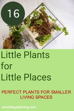 Great selection of compact plants for compact spaces. Discover which small plants are the best choices for smaller living spaces.