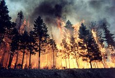 I slammed onto the brakes as my eges widened. the forest, its burning! I auickly got out my car and slammed the door shut, seeing animals and humans escape the forest coughing.
