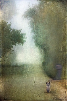 Foggy Morning Encounter by Distressed Jewell, via Flickr