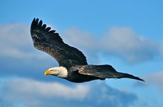 He sees you, before you saw him. Haida Gwaii, Native Indian, Archipelago, British Columbia, Bald Eagle, Growing Up, Islands, Mystery, Places To Visit