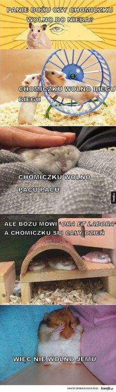 Czy chomiczku wolno do nieba? Animal Memes, Funny Animals, Cute Animals, Ora Et Labora, Laugh Or Die, Polish Memes, Weekend Humor, Aesthetic Memes, Funny Mems