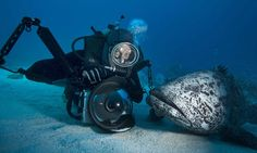 Coming face to face with the ocean's most dangerous predators: The incredible underwater photographs of sharks, crocodiles and deadly jellyf...