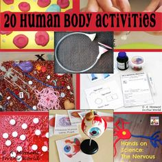 Our boys are loving learning about the human body. Here are 20 Human Body Activities that we have enjoyed! 1. Learning about what blood is made of at I Can Teach My Child 2. Learning about how muscles work at Kids Activities Blog 3. At the Moffatt Girls, there is a cute dental activity. 4. …