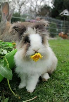 Image result for picture of rabbits destroying gardens