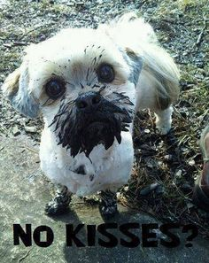 """Why you give no kisses?"" #funny #dog"