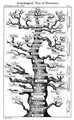 Cómo hacer un árbol gramatical en línea | eHow en Español