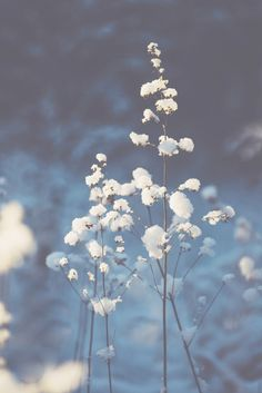 Winter / White & light - Winter Photography by Nina Lindfors Blue Aesthetic Pastel, Flower Aesthetic, Light Blue Flowers, Flower Lights, Winter Photography, Light Photography, Photography Flowers, Aesthetic Photography Nature, Winter Light