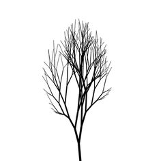 small line tree tattoo?