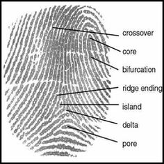 "Discover Your Unique Fingerprint - Good activity for step 3 of Cadettes' Special Agent Badge - ""Try the Science"" behind fingerprinting"