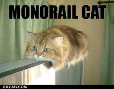 HAHA! / #humour #funny #lol